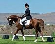 ANNAPOLIS #622141  2003 chestnut stallion by Monogramm