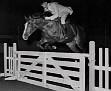 AANADRA+#11566 (Aarief x Nadrah, by Natel) 1956-1975 bay mare bred by Lasma Arabian Stud; produced 4 registered purebreds