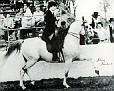 AMBARYZ #48408 (*Bask x *Bint Ambara, by Comet) 1968 grey stallion bred by Lasma; sired 30 registered purebreds