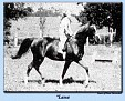 LASSA (Koheilan I x Zulejma, by Koheilan (db)) 1930 chestnut mare; imported to USA 1937 by Gen. J.M. Dickinson. Produced 13 registered purebreds in the USA.