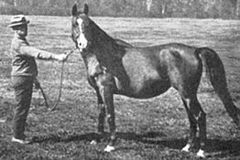 BAZRAH #378 (*Rodan x Bathsheba, by *Hauran) 1919 bay mare bred by WR Brown/ Maynesboro Stud; produced 20 registered purebreds