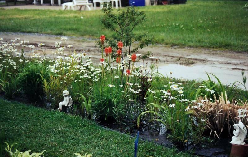 water garden week 5 6 18 -2jpg