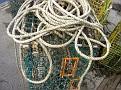 line for lobster traps