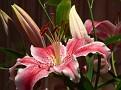 fz20   Flowers 2 2009 007