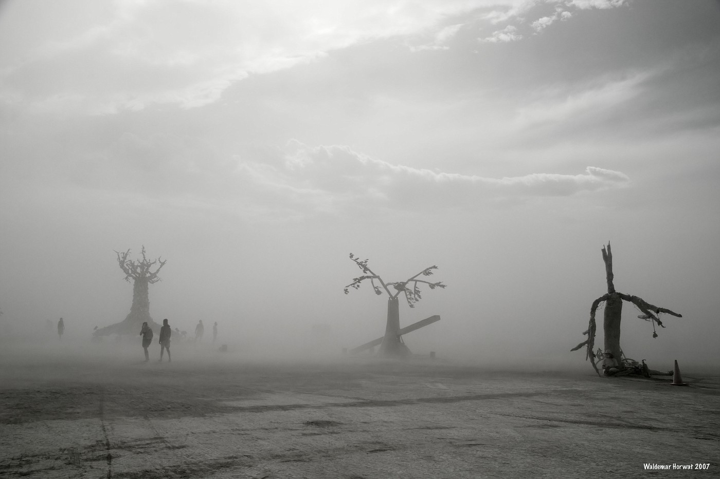 Dusty Trees