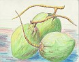 Trois noix de coco.