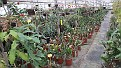 Nursery the Epiphyllums