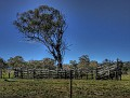 Bush yards near Stuart Town 001
