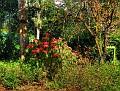 Brisbane Botanic Gardens 009