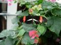 gardens 043