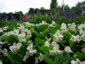 gardens 063