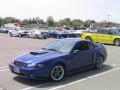 Roush Mustangs  0014
