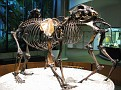 Page Museum in Los Angeles.  AKA the La Brea Tar Pit Museum...