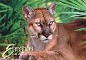 07- FL State Animal