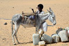 Kulbaczenie osła