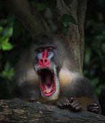 Singapore Zoo Parks 03