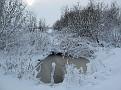 sneeuw2 010
