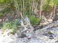 woods near Nippurs