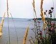 Lake Mitchell seen through wildflowers on the beach, near the Sun 'n Snow Lodge, Cadillac, Michigan, Summer 1980