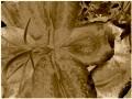 Flower Service 058d