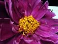 Flower Service 062a