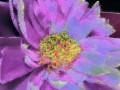 Flower Service 062f