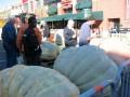 World Champion Pumpkin Contest, Byward market