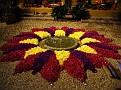 FlowerShow-6.jpg
