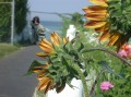 Flowers on Marginal Way 10