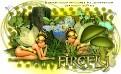 csgf firefly