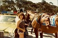 San Francisco 1981 034