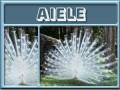 aiele-gailz0304-albino peacock.jpg