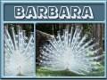 barbara-gailz0304-albino peacock.jpg