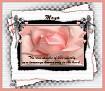 Mayo-gailz-pink rose
