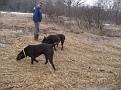 Kona Gypsy & Matt back acres.JPG