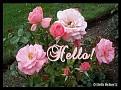 Hello003