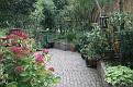 Garden 2012 October 8 (3)