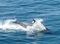 Bottlenose Dolphin (2)