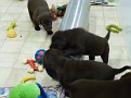 March 18 2012 Callie pups (71)