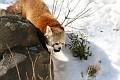 070216 Natl Zoo155