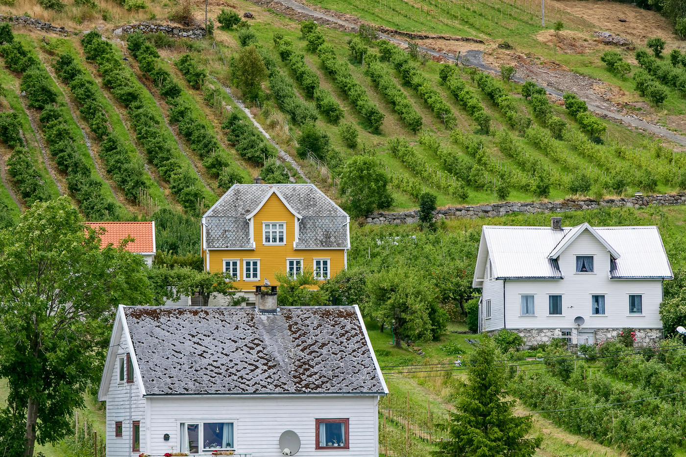 Norwegian houses