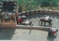 Jaipur 026