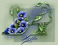 FloralShoeHello