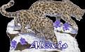 Alexis Big Cats2