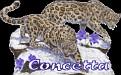 Concetta Big Cats2