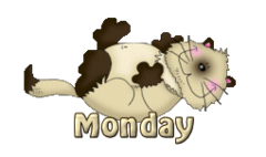 DOTW Monday - KittySitUps
