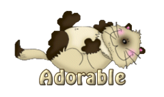 Adorable - KittySitUps