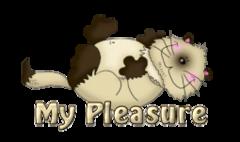 My Pleasure - KittySitUps