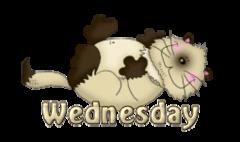 DOTW Wednesday - KittySitUps
