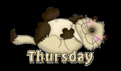 DOTW Thursday - KittySitUps
